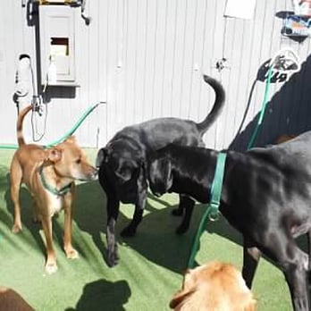 Dr Boyds Dog Training Yelp