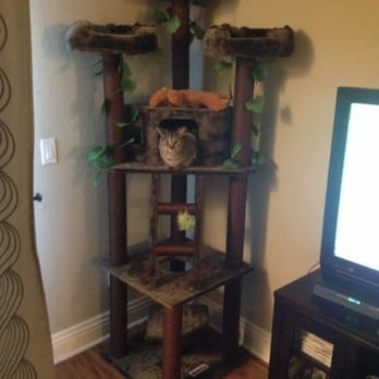 Cat Tree Factory 17 Photos Amp 26 Reviews Pet Stores