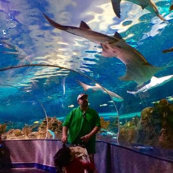 Ripley's Aquarium Of The Smokies - 572 Photos - Aquariums ...