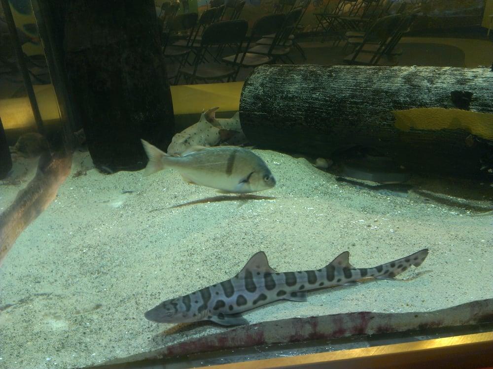 Public Aquariums Near Me Related Keywords & Suggestions - Public ...