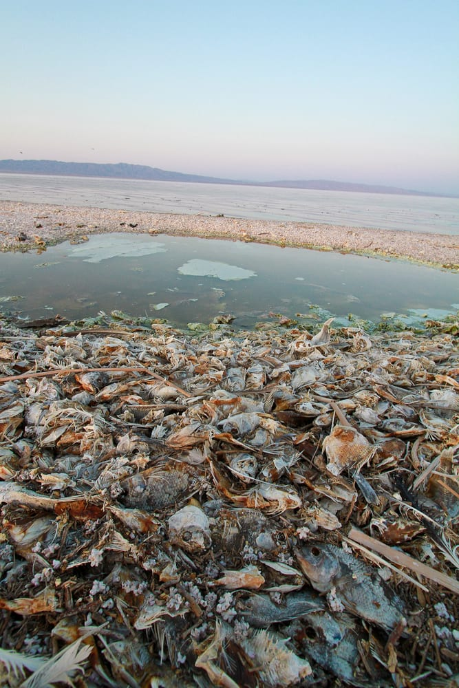 Salton sea fish die off yelp for Salton sea fishing report