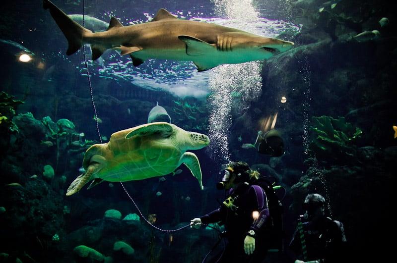 The Florida Aquarium 465 Photos Aquariums