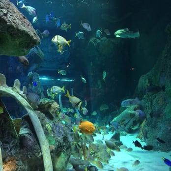 Fish Aquarium Kansas City Mo Fish And Stingrays Abound