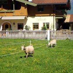 Garten mit Ziegen und herrlicher…