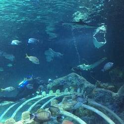 Sea Life Kansas City Aquarium - 35 Photos - Arts ...