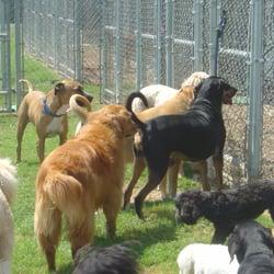 Fondren 5 star pet resort pet boarding pet sitting for Five star dog resort