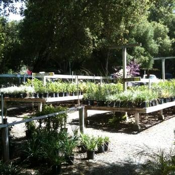 Myrtle Creek Botanical Gardens Nursery Fallbrook Ca Yelp