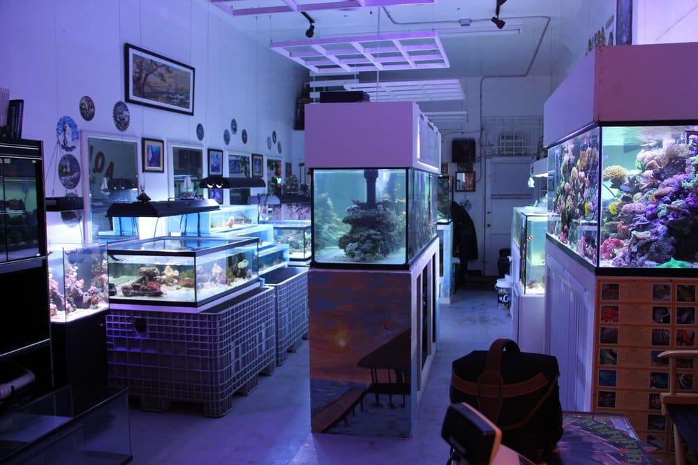 Reef Aquarium Shop Closed 13 Photos Aquariums