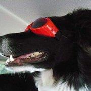 RedRoverDogz - I'm on my way to a RedRoverDogz Safari! - Indianapolis, IN, Vereinigte Staaten