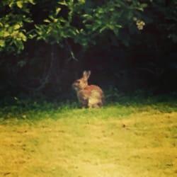 Saw a bunny