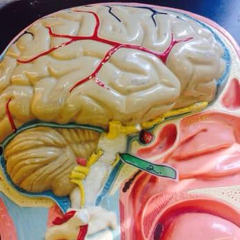 Anatomy And Physiology Case Study Help - Programming Homework