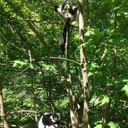 Abhängen im Vari-Wald