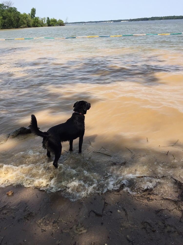 Alum Creek Dog Park Directions