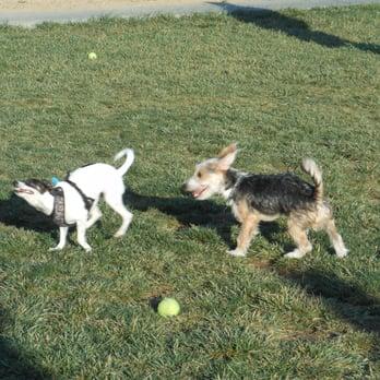 Central Park Dog Park Fremont Ca