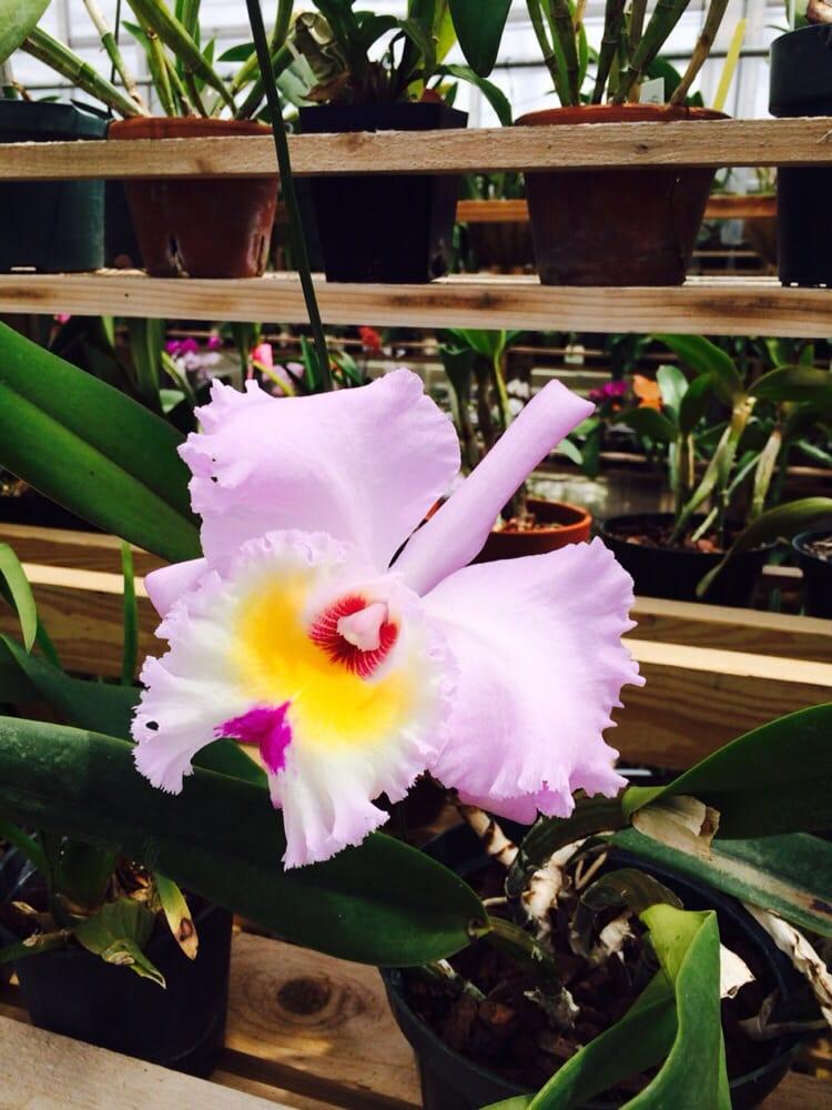 South Texas Botanical Gardens And Nature Center Botanical Gardens Corpus Christi Tx Yelp