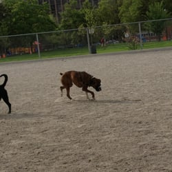 Jack Purcell Dog Park Ottawa