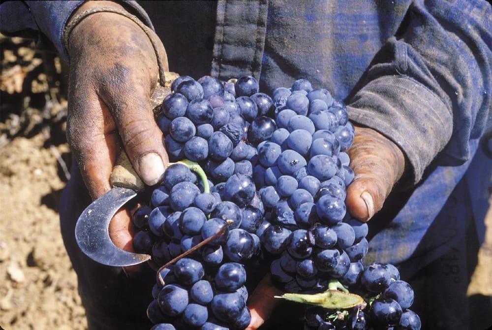 Terra D Oro Winery 53 Fotos Weinhandlung Amp Winzer