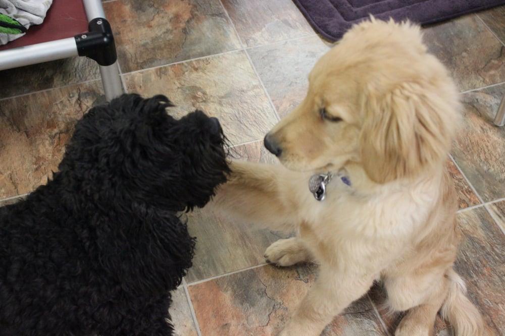 DogLife Broomfield - 11 Photos - Pet Boarding/Pet Sitting - 555 ...
