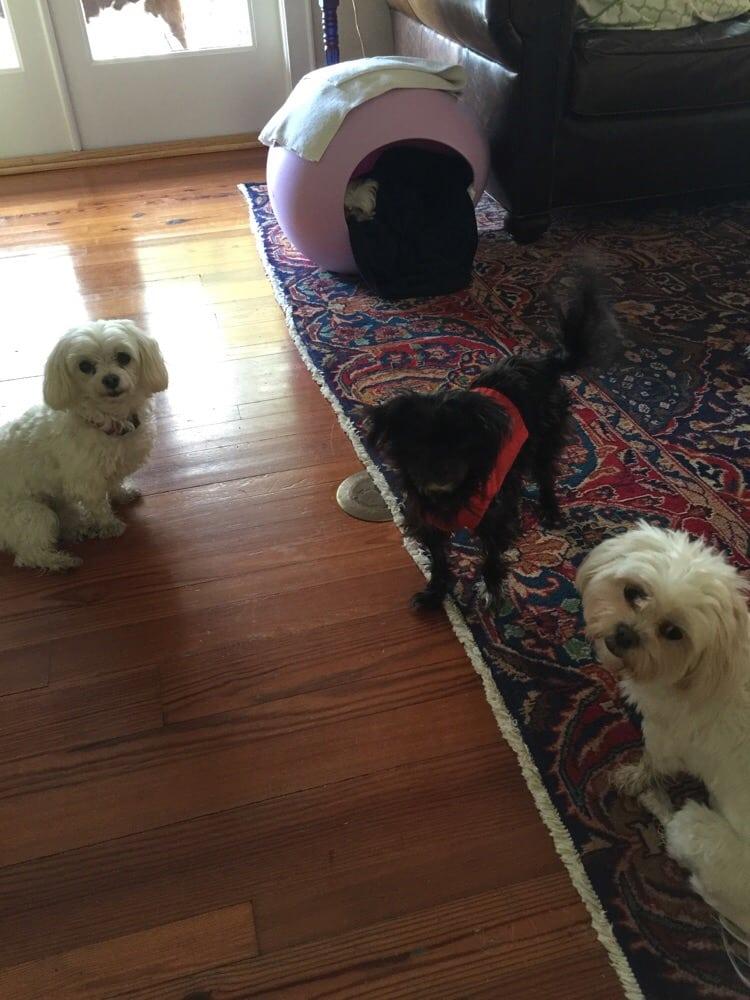 Garden Veterinary Clinic Veterinarians North Orange Orlando Fl Reviews Photos Yelp