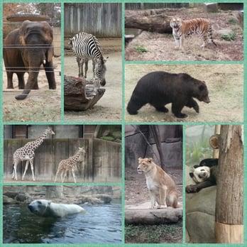 zoo park næstved escort sønderborg
