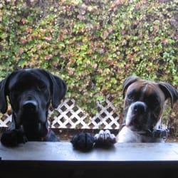 Paws penthouse pet boarding pet sitting sherman oaks for Dog boarding santa monica