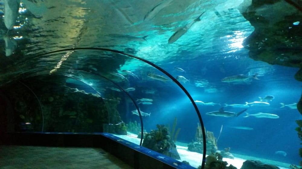 Nebraska Public Aquarium Sequa For