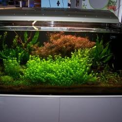 Elos 120 ein Aquarium in dem sich sowohl…