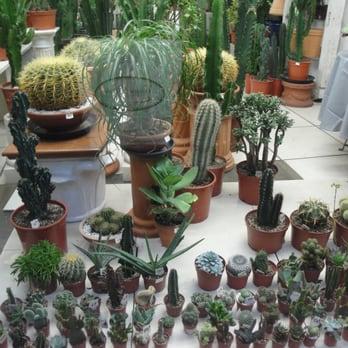 cactus et plantes grasses fleuriste saint georges toulouse avis photos yelp. Black Bedroom Furniture Sets. Home Design Ideas