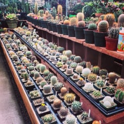 Paulino Gardens Nurseries Gardening Denver Co