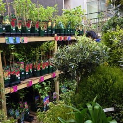 Truffaut 21 photos jardinerie p pini re jardin des for Jardinerie belgique en ligne