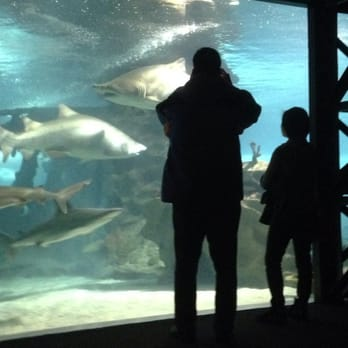 Greater Cleveland Aquarium 68 Photos Aquariums West