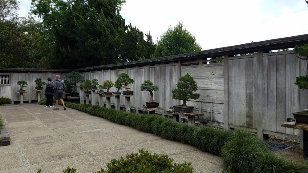 Bonsai Gardens Yelp