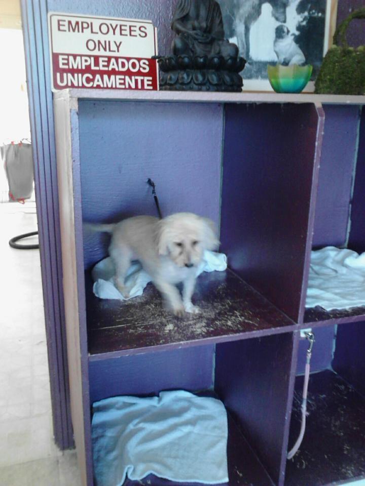 Dog Grooming Chula Vista