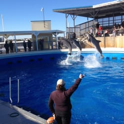 Gulfarium Marine Adventure Park - Aquariums - Fort Walton ...