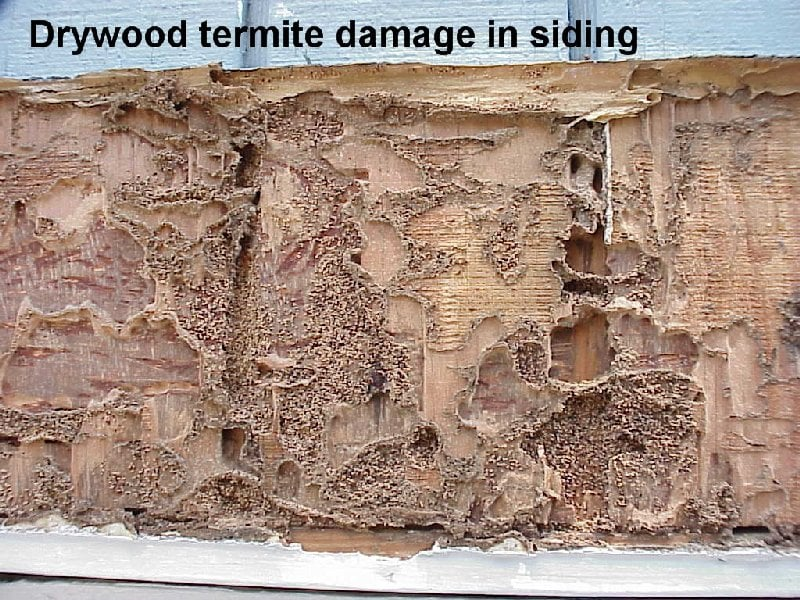 termite lab report