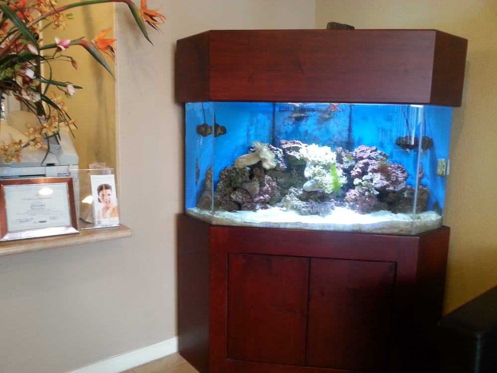 A fish tank in my doctors office yelp for Office fish tank