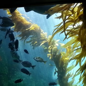 Birch Aquarium La Jolla Ca United States You Got To