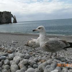 Lockvogel von Etretat