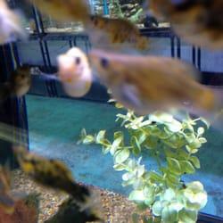 Aquatek tropical fish 23 photos pet stores austin for Fish store austin
