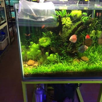Pet fish nyc the village pet store and charcoal grill for Pet supermarket fish tanks