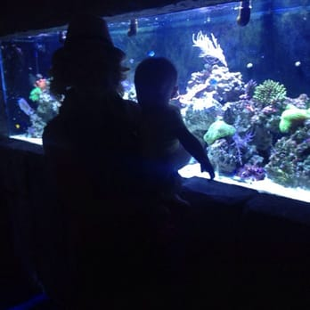 Austin Aquarium Aquariums Austin Tx Reviews