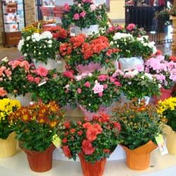 Savon Cash & Carry Florists - Albuquerque, NM, États-Unis. lots of beautiful mums, daisies, and Azaleas!