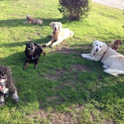 Piedmont Pet - The gang at Oyster Bay - Oakland, CA, Vereinigte Staaten