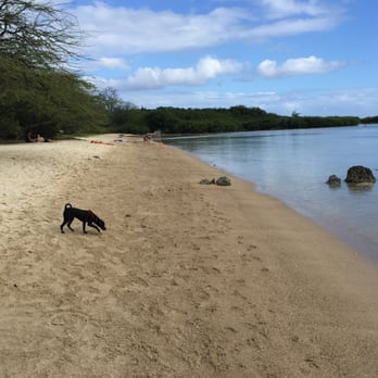 Dog Friendly Beaches Oahu