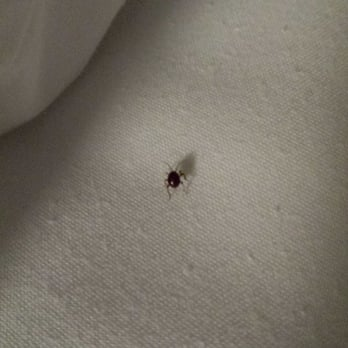 Park Avenue Hotel Bed Bugs