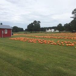 pumpkin farm youngsville nc