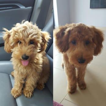 Lucky Puppy Dog Groomer Tx