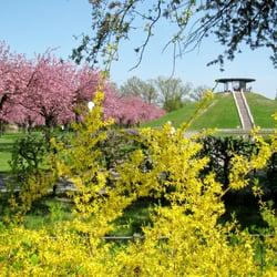 Forsythien und Zierkirschen blühen…