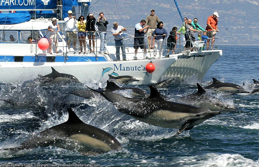 Dolphin Watching Tours Near Me