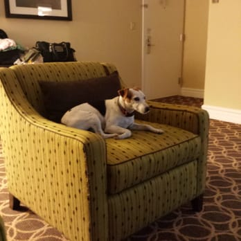 Madera Ca Dog Friendly Hotel
